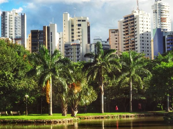 My dear friends! My beautiful city of Goiania, capital of Goias State. Happy life for all! Goiânia Landscape_Collection Landscape Trees TreePorn