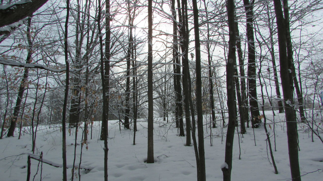 Taking Photos Winter Wonderland Snowy Forest Cool_capture_ Cloudy Day Alone Time Eerie Diggins Trail Cadillac Pure Michigan