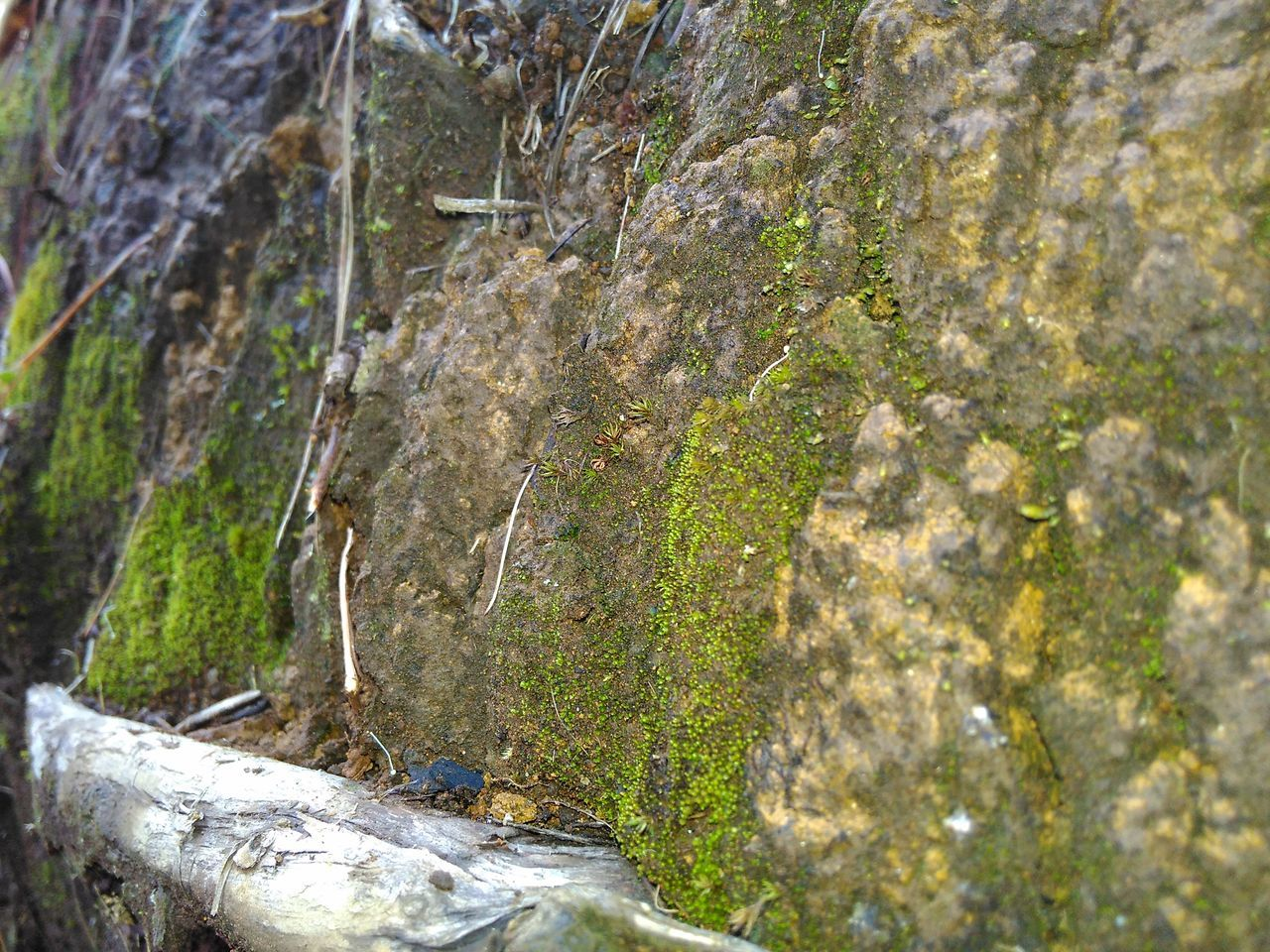 moss, rock - object, no people, nature, tree trunk, outdoors, day, forest, tranquility, lichen, tree, beauty in nature, close-up, grass, freshness