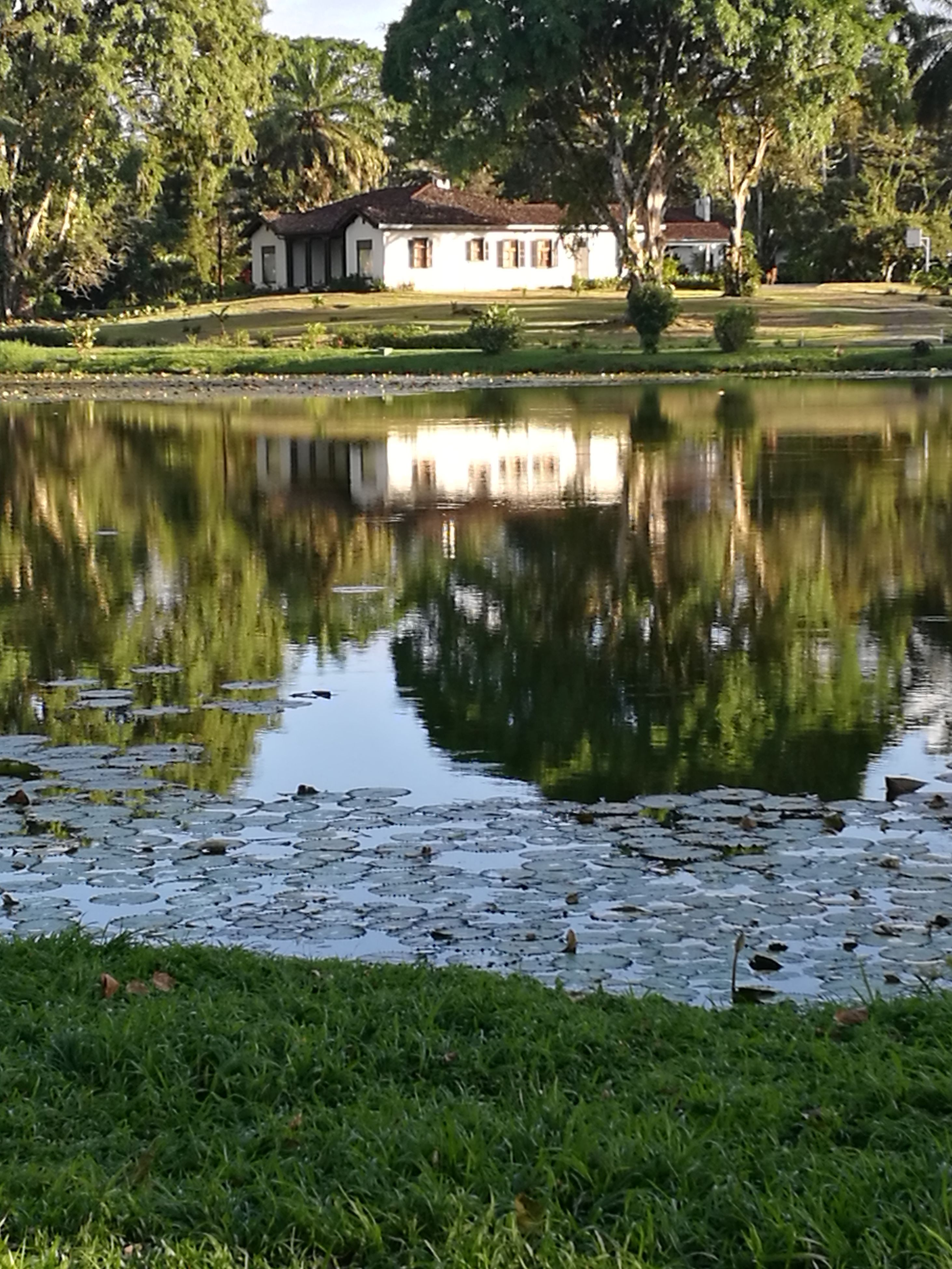 reflection, water, lake, nature, tree, outdoors, no people, animal themes, grass, day, reflection lake, floating on water, animals in the wild, beauty in nature