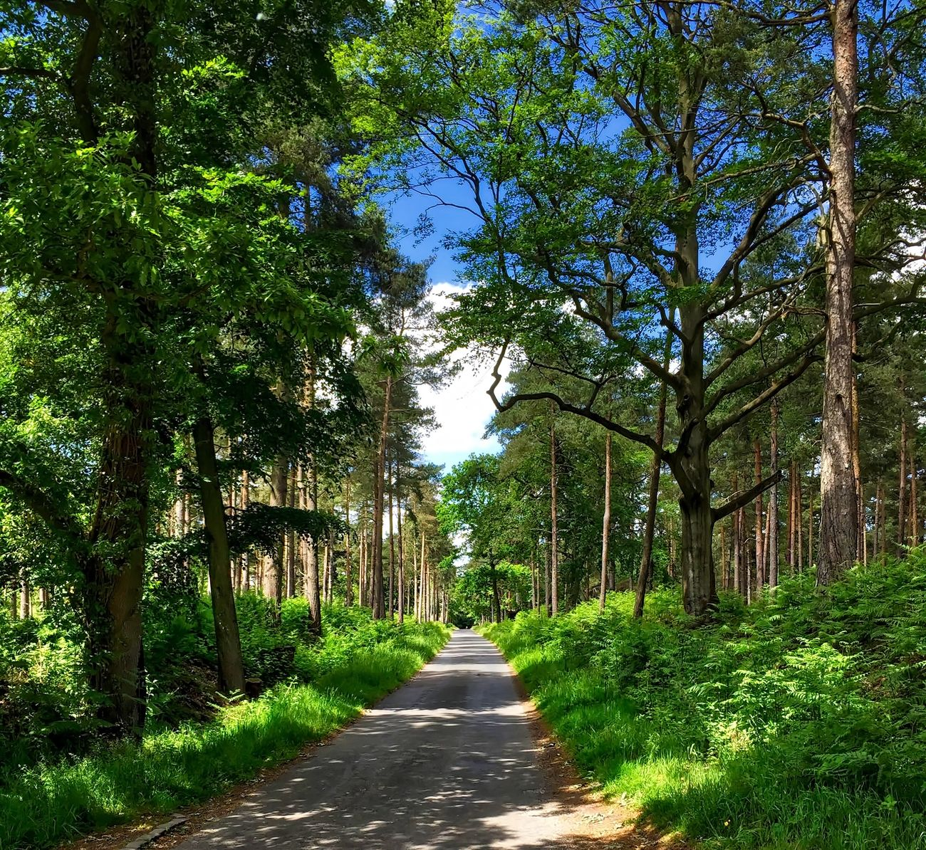 A road in the country Beauty In Nature Day Footpath Growth Nature No People Outdoors Scenics The Way Forward Tree