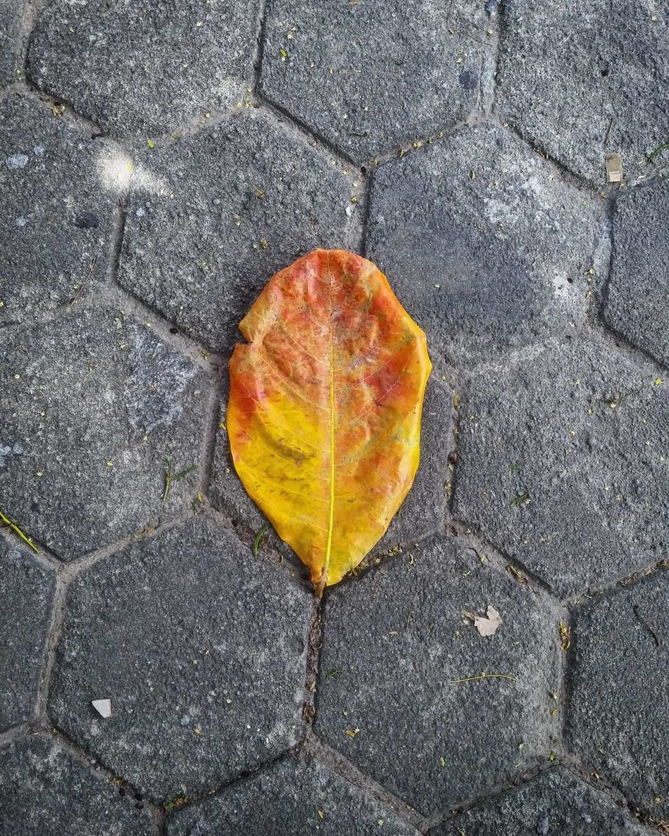 Leaf High Angle View Heart Shape Day Textured  Nature Love Change Autumn Outdoors No People Backgrounds Close-up Fragility Beauty In Nature Tree Ring