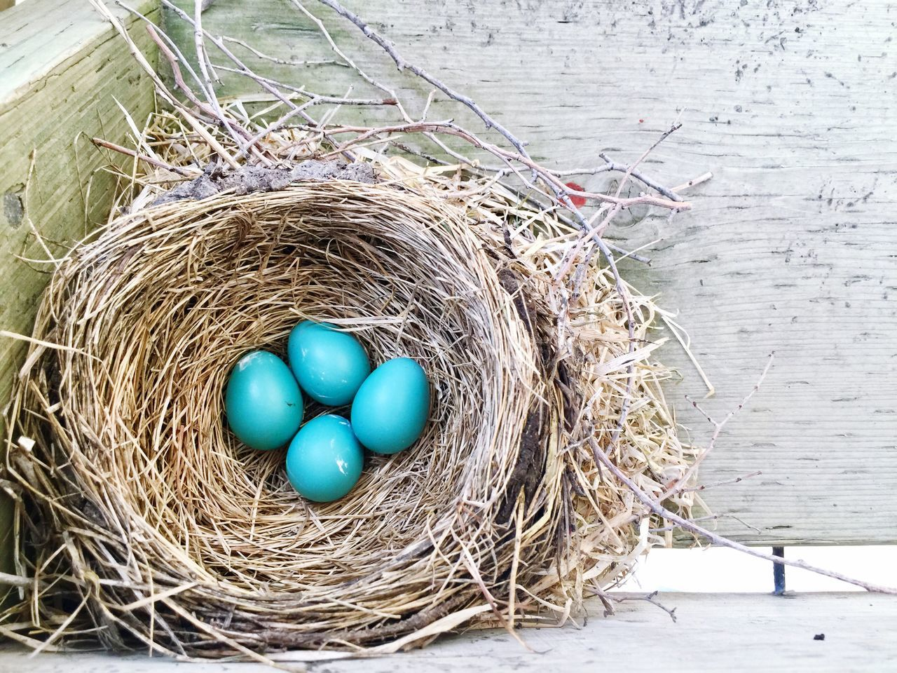 No People Egg Fragility Hay Blue Indoors  Close-up Bird Nest Day Nature Outdoors High Angle View