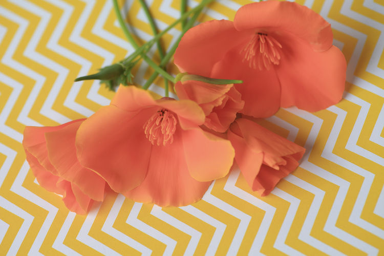 California poppies on yellow chevron background Beauty In Nature Beauty In Nature California Poppies Chevrons Design Floral Flower Petals Fresh Flowers Indoors  Natural Light Nobody Orange-colored Overhead Pattern Spring State Flower Stems Textures Vibrant Colors Warm Colors White Yellow
