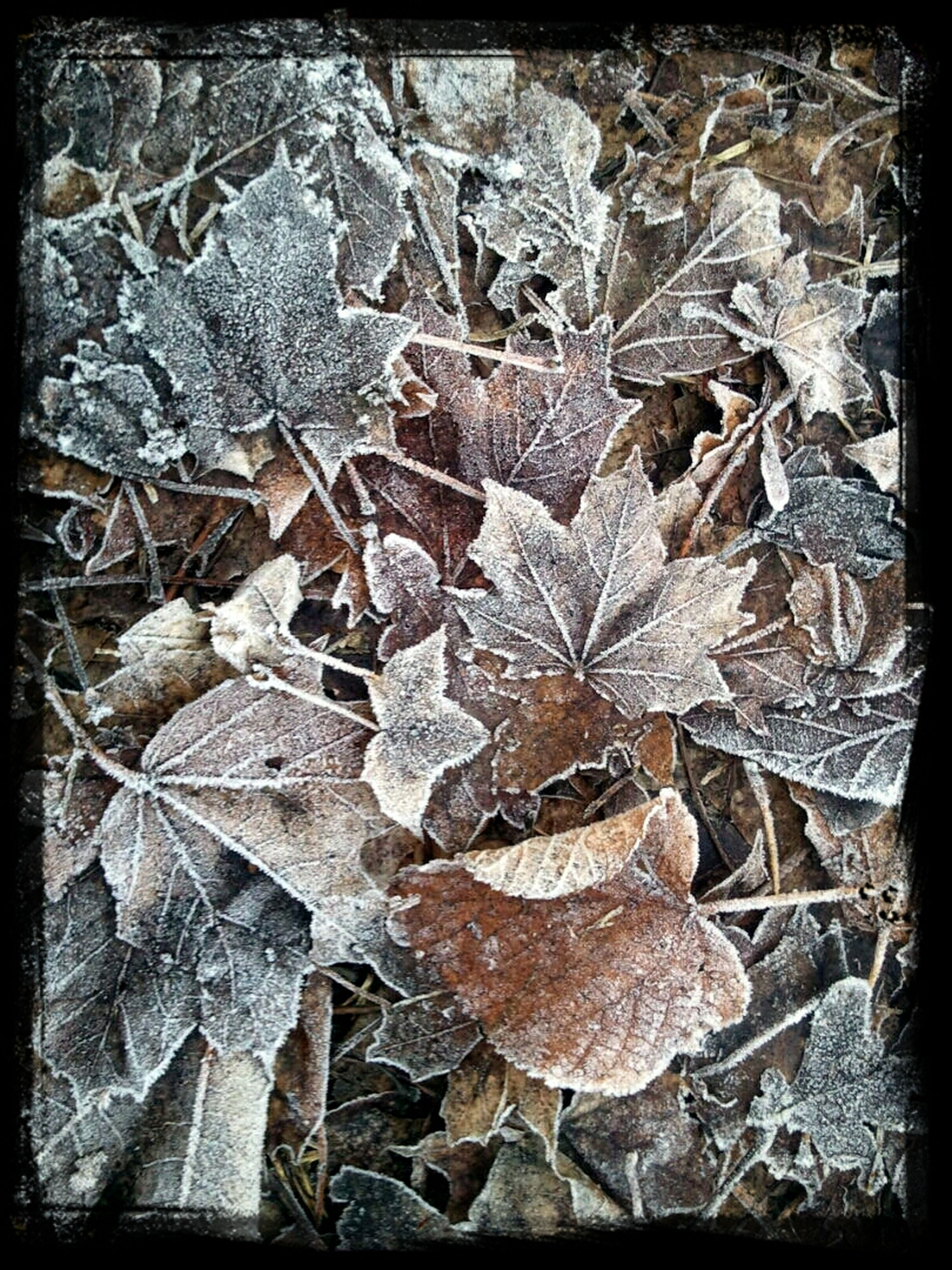 transfer print, auto post production filter, high angle view, leaf, dry, season, close-up, nature, autumn, day, outdoors, ground, no people, leaves, natural pattern, fallen, winter, fragility, wood - material, cold temperature