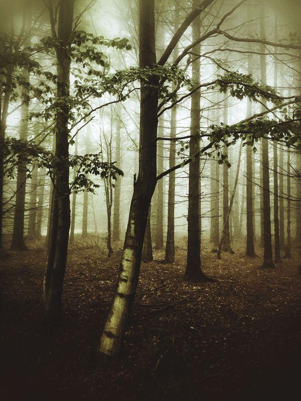 Magic Forrest II Tree Forest Beauty In Nature WoodLand Nature Fog Foggy Outdoors Exceptional Photographs EyeEm Masterclass EyeEm Best Shots EyeEm Nature Lover Tadaa Community Tree Thueringen No People
