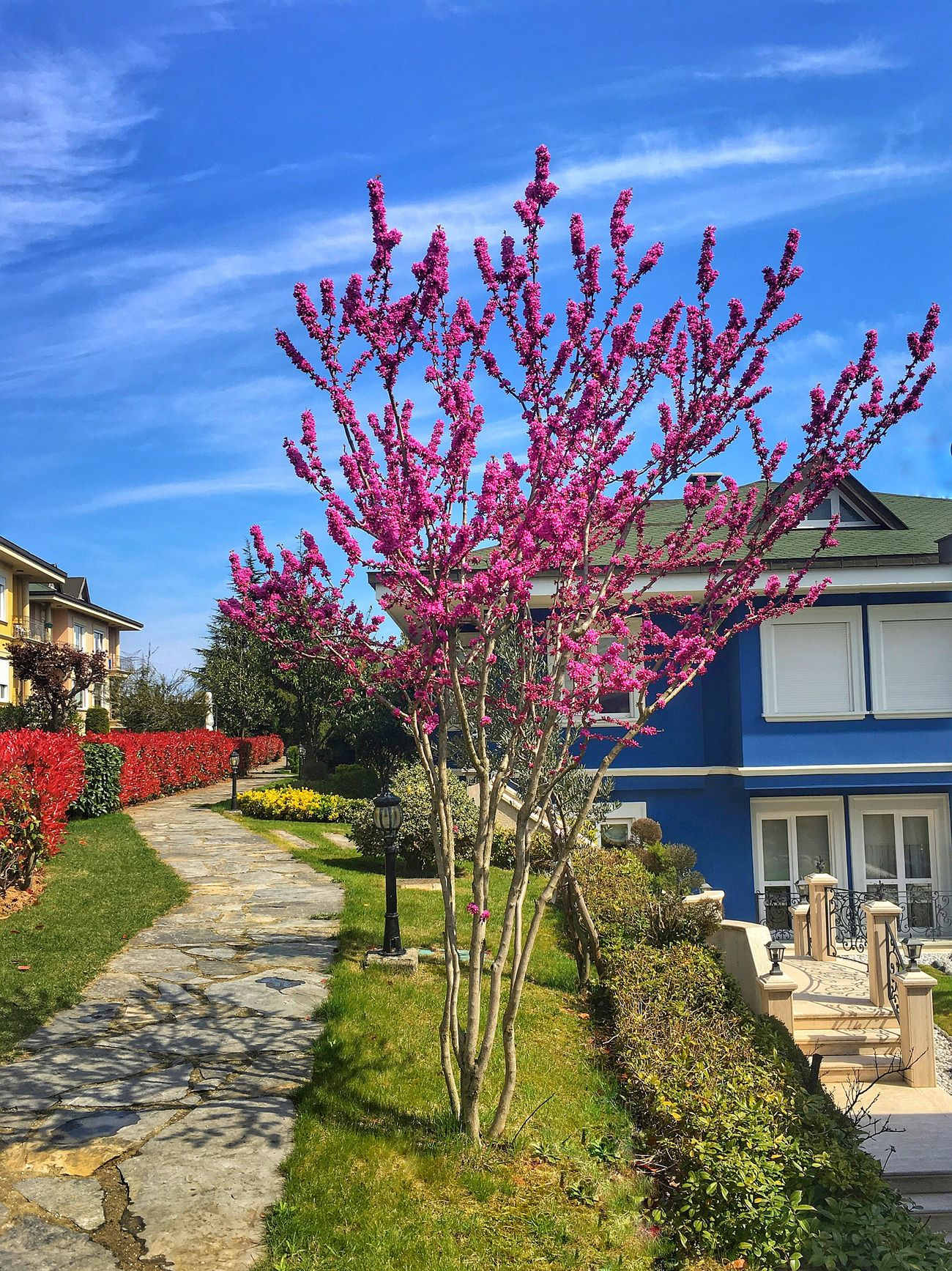 Erguvan Flower Growth Tree Sky Architecture Built Structure Building Exterior Nature Blossom City Outdoors Springtime Beauty In Nature No People Plant Pink Grass Fragility Day Freshness