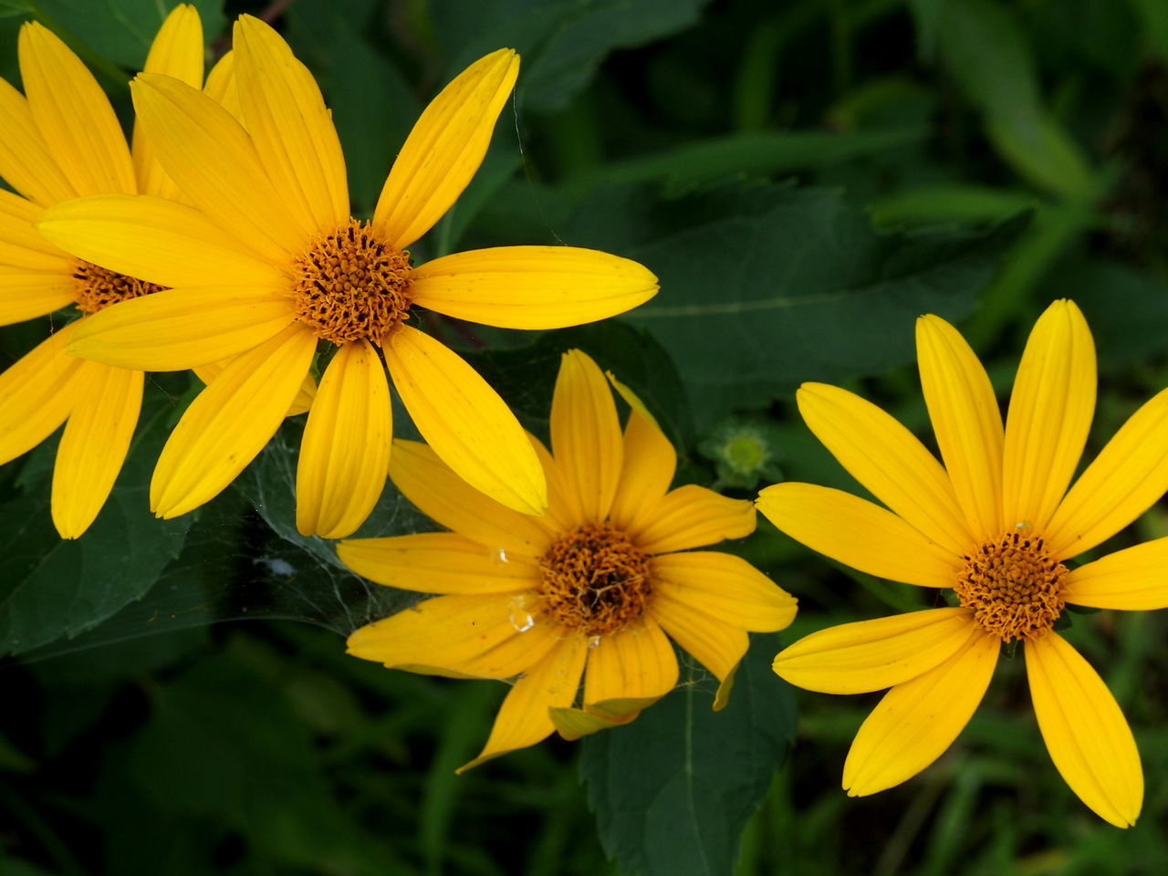 flower, yellow, petal, fragility, growth, beauty in nature, flower head, plant, freshness, nature, pollen, blooming, no people, day, outdoors, close-up, black-eyed susan