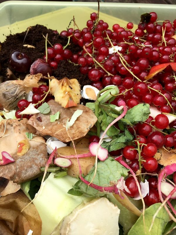 Fresh organic rubbish with currants in a small plastic bucket Bucket Close-up Coffee Powder Compost Compost Pile Currants Day Dumpster Environment Food Freshness Garbage Healthy Eating Household Indoors  Kitchen No People Organic Food Ready-to-eat Recycle Small Teabags Trash Vegetable Waste