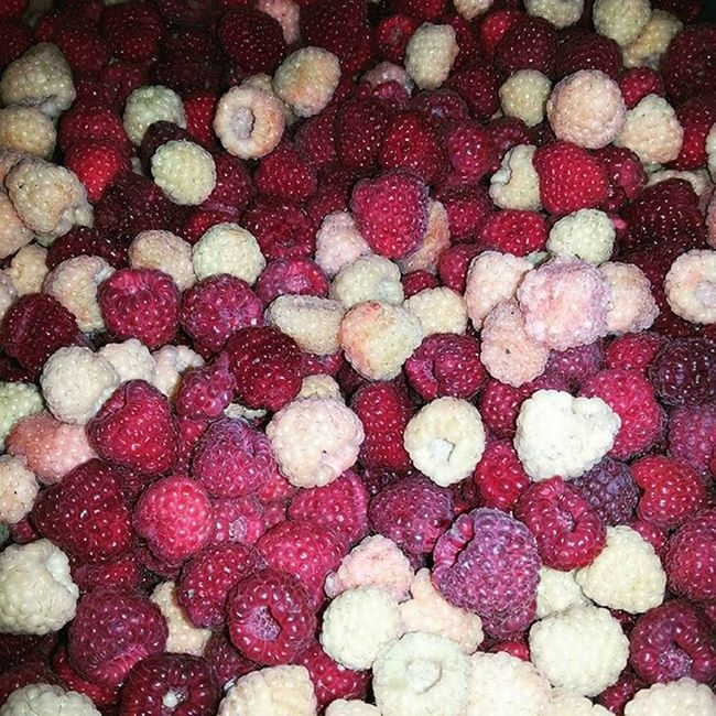 Red And White Raspberries Professionalphotographer Professionalphoto Photooftheday Naturelovers Nature_perfection Natural Fruit Beli I Crveni Miker