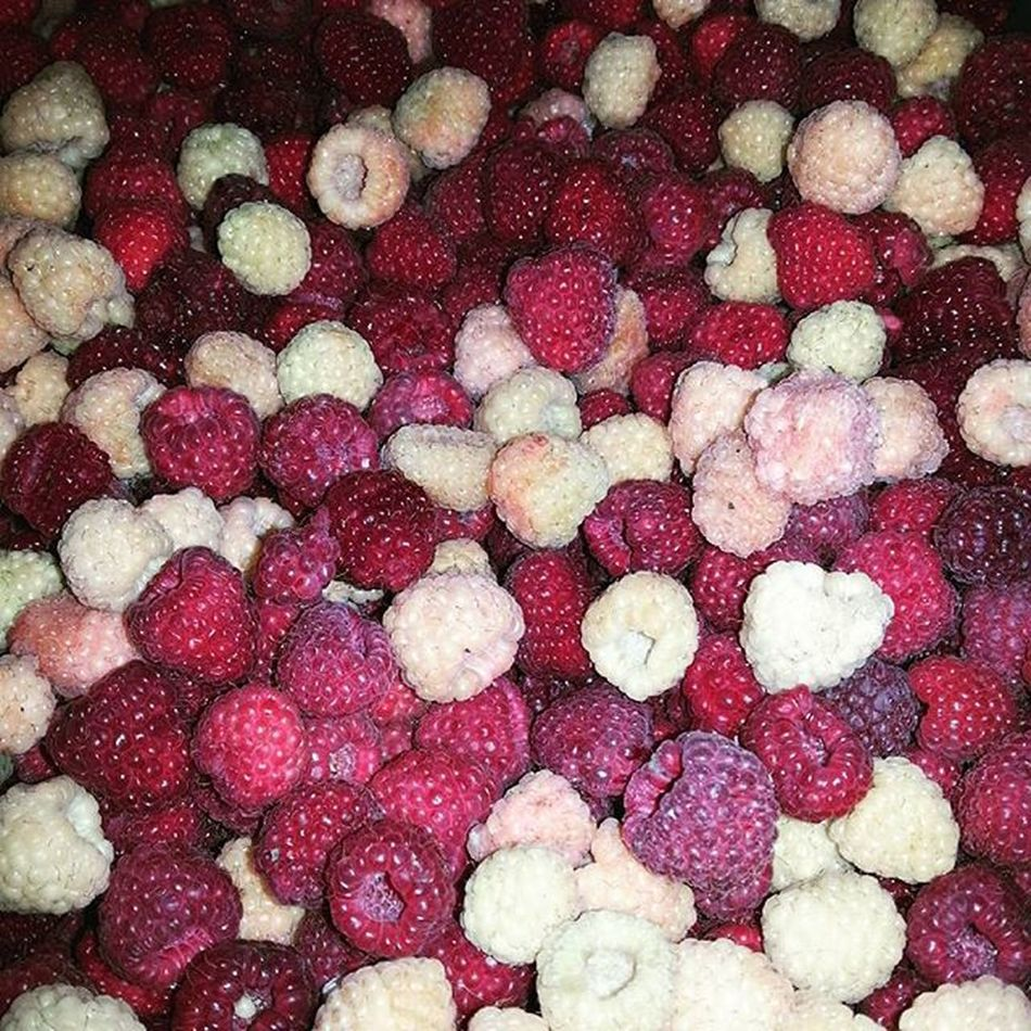Red And White Raspberries Professionalphotographer Professionalphoto Photooftheday Naturelovers Nature_perfection Natural Fruit Beli I Crveni Miker