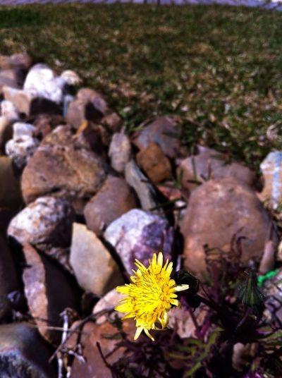 Nature Stones OneLove Makro Flower