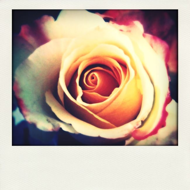 I want to thank everybody for taking the time to check out my gallery and for all the nice comments. It really inspires to keep creating new work. Love you all ????? Roses Thanking You People Of EyeEm IPhoneography