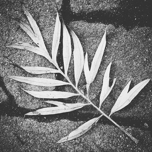 Plants Nature Naturelovers Nature_shooters Naturegram Love_natura LoveNature Ig_naturelovers Bignature Naturepics Ig_contrast_bnw Bnw_society Bnw_life Ig_bnw Bnw_captures Bnwmood Contrast Lights Shadows Silhouette Instaplants Plantgram Instagood Instalife Dailyphoto bestpicture goodtime goodtimes lavitainunoscatto