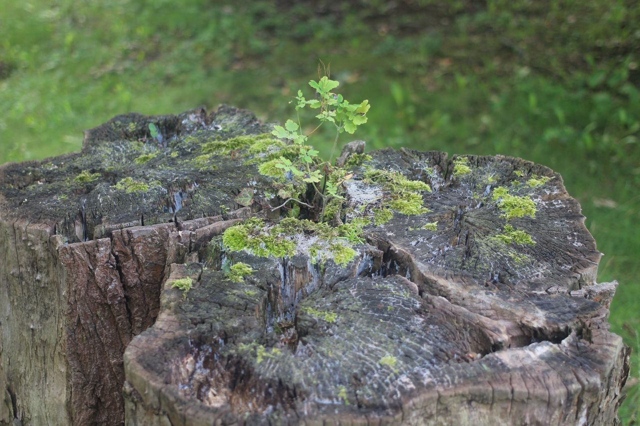 nature, tree stump, no people, log, tree trunk, outdoors, wood - material, growth, day, close-up, plant, textured, tree, tree ring, beauty in nature