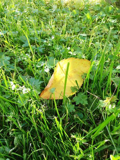 Grass Leaf Nature Green Color