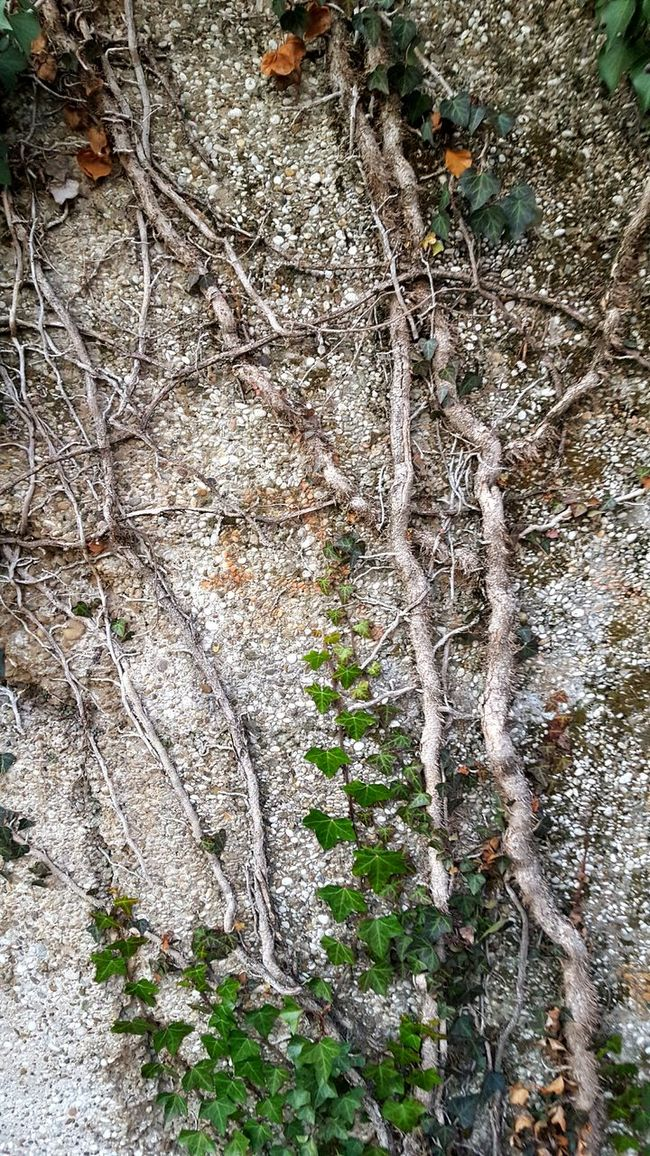 Wall Nature Nature Photography Tree Art Wall Wall Art Growing Plants Growing Leaves Wintertime Green Leaves Plants Plants On The Wall