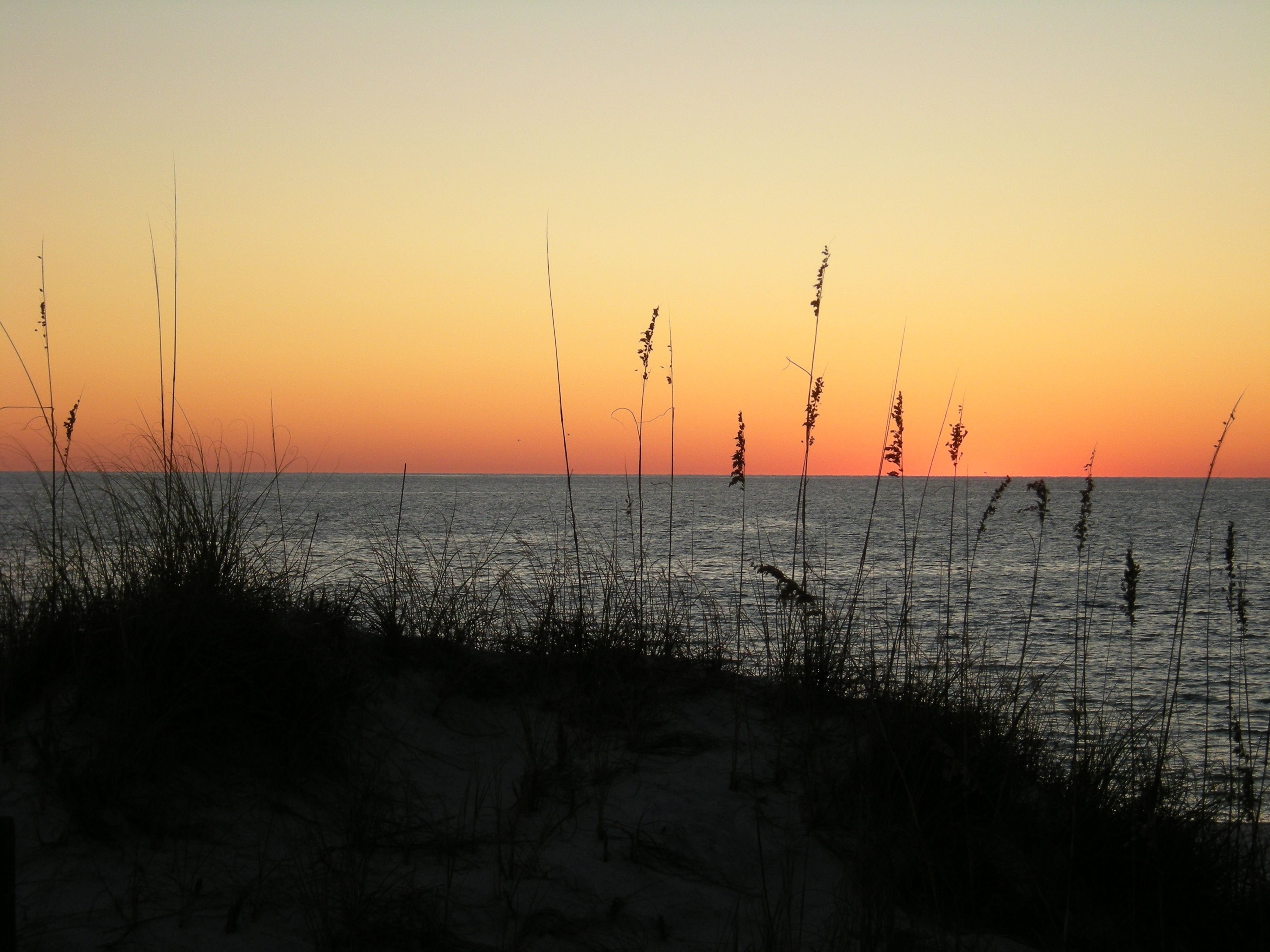 sunset, tranquil scene, sea, nature, tranquility, beauty in nature, scenics, water, horizon over water, silhouette, outdoors, no people, idyllic, beach, sky, growth, marram grass, travel destinations, grass, day