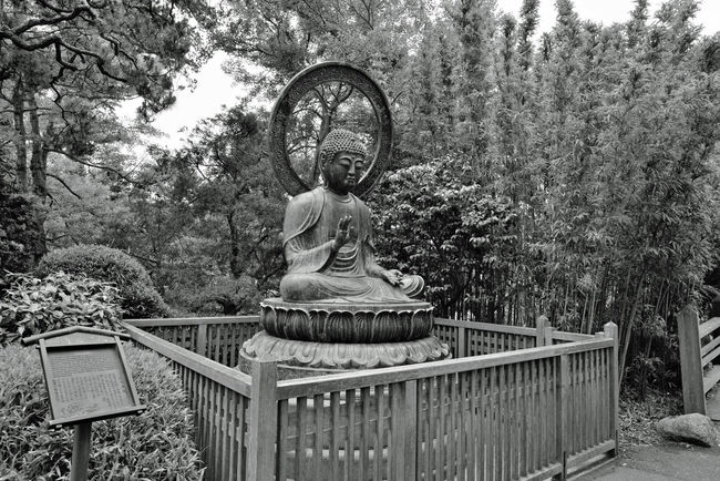 Budda Statue @ Japanese Tea Garden 3 Golden Gate Park San Francisco Ca Bronze Cast 1790 Tajima, Japan. Cast For Taionji Temple Presented To The Garden In 1949 Budda (563? To 483 B.C.) Born Prince Siddhartha Of The Sakyas The Historic Founder Of The Buddist Religion Renounced His Home Of Luxury At Age 29 Known As Budda, The Enlightened One Landscape Landscape_photography Landscape_Collection Landscape_lovers Black & White Black And White Monochrome Black And White Collection  Black And White Photography Japanese Tea Garden