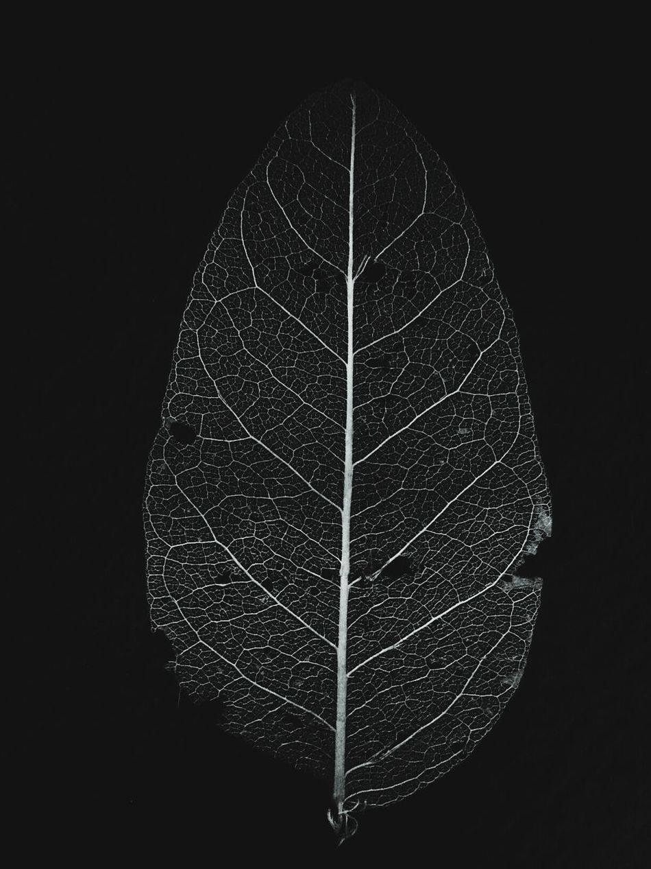the last leaf. Leaf Black & White Artistic EyeEm Gallery EyeEmNewHere EyeEm Creative Photography AK'rtist AK' Unique Black And White Popular Beautiful Black Background Art Is Everywhere EyeEmNewHere