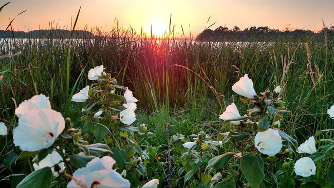 My early morning trip to the lake did not let me down Check This Out Beautiful Day Peace And Quiet Sunrise Enjoying The Sun Pleasure Seeker Rise Above Nature State Park  Come See Me!!!!!