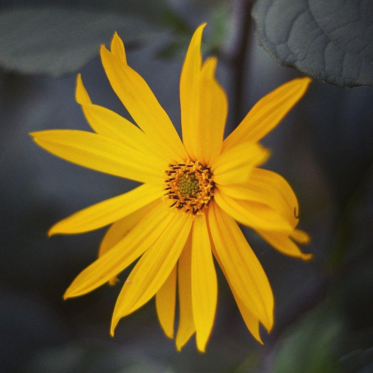 Blumen sind das Lächeln der Erde . Earth laughs in Flowers .