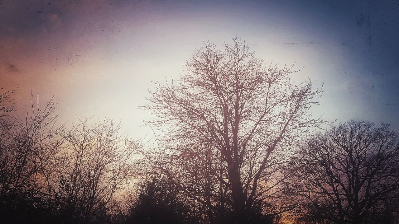 bare tree, tree, tranquility, nature, low angle view, beauty in nature, silhouette, tranquil scene, branch, outdoors, sky, scenics, no people, sunset, clear sky, day