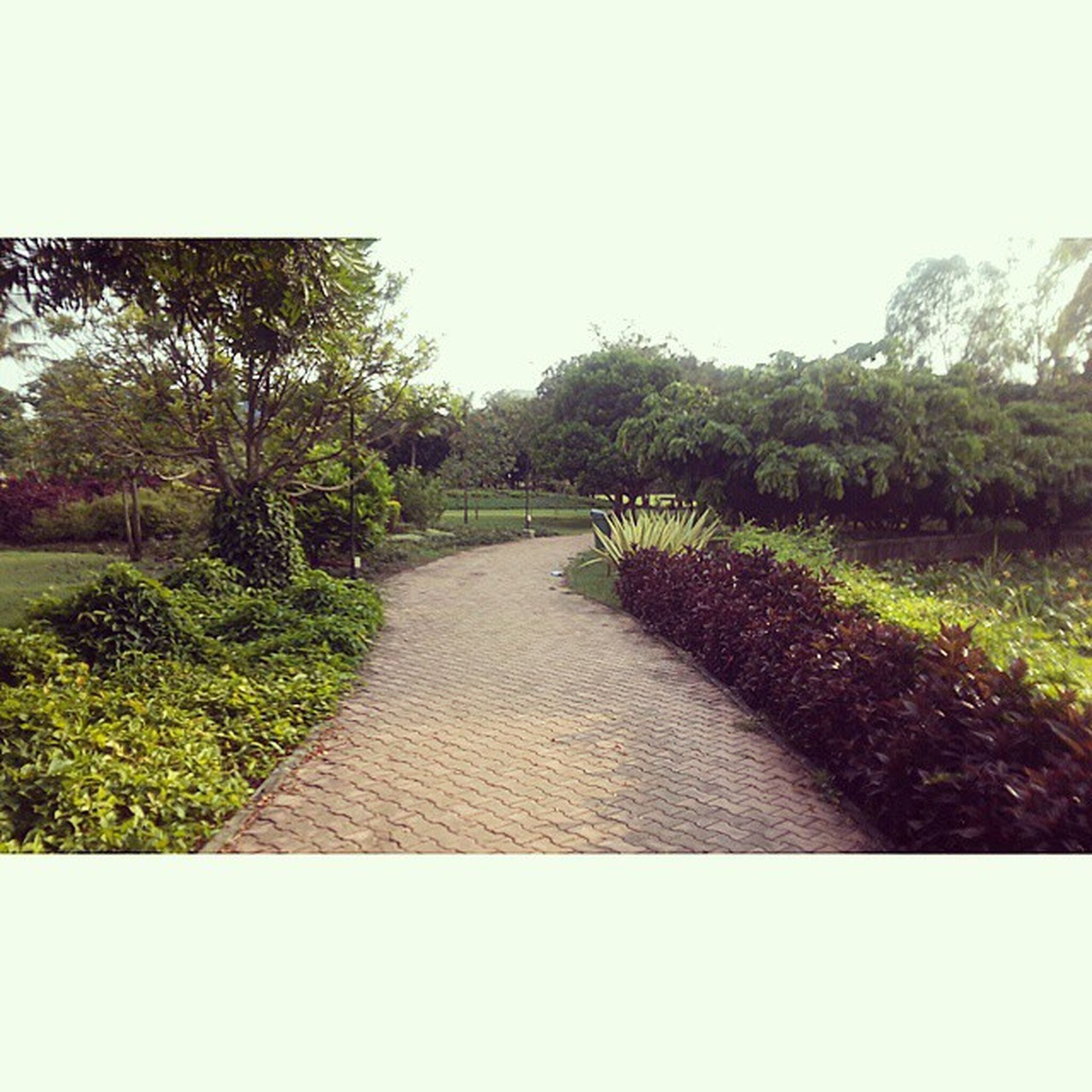 Aditigardens Magarpatta Pune Puneigers Puneinstagrammers Walktrail Nature Tagsforlikes Summer Beautiful Sunrise Blue Flowers Tree Twilight Clouds Beauty Light Cloudporn Photooftheday Love Green Skylovers Dusk Weather day android mothernature