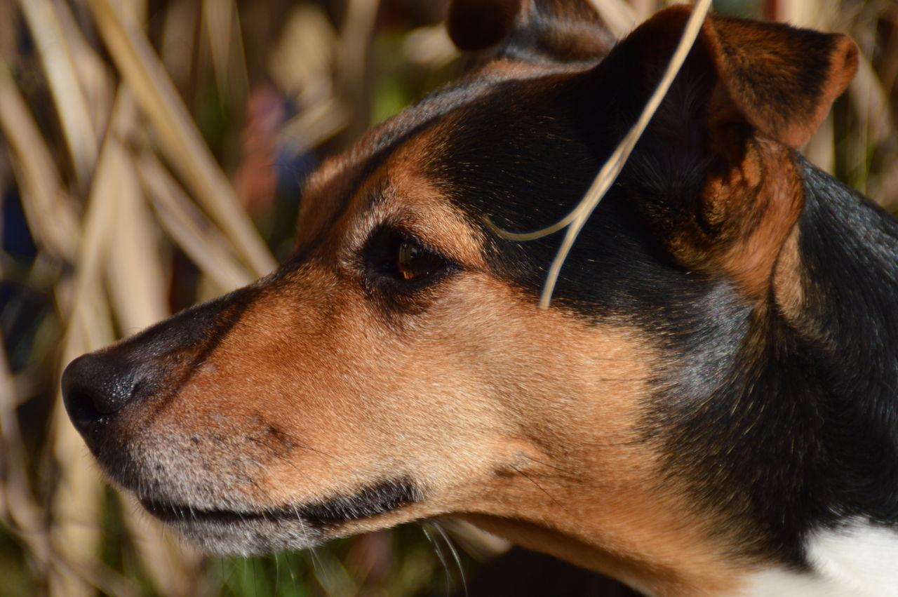 Jack Russel Terrier Makro Mydog♡ Nature Zoom Portrait
