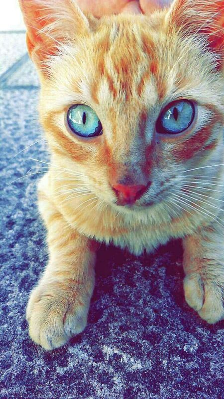 Kukadita 😻 That's Me Check This Out Hi! Taking Photos Cutecats Beautiful Cuttest  Lovelovelove Lovely