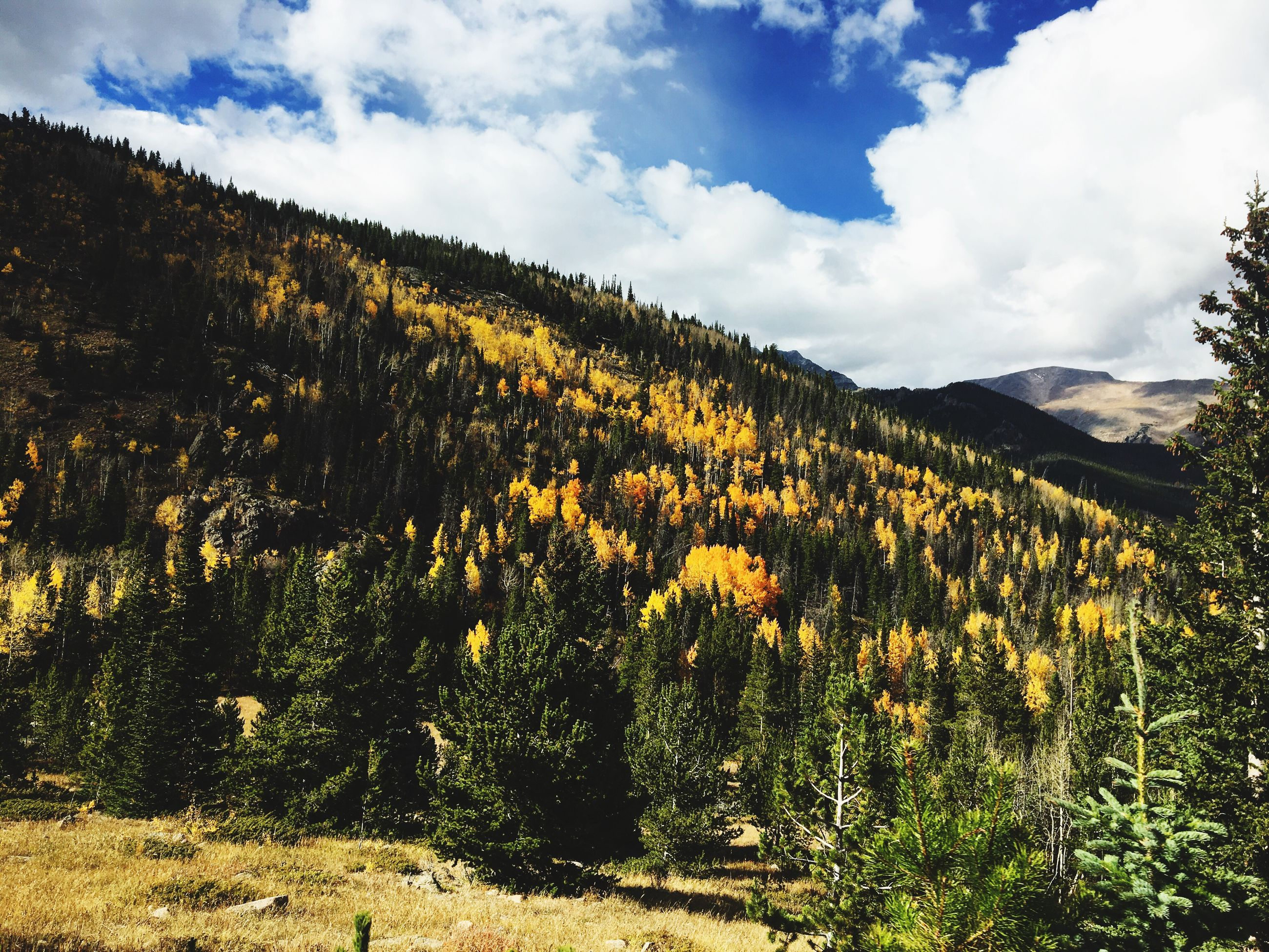 tranquil scene, mountain, growth, tree, sky, scenics, tranquility, beauty in nature, nature, yellow, cloud - sky, mountain range, abundance, day, outdoors, growing, remote, physical geography, majestic, no people, non-urban scene, freshness, fragility, in bloom