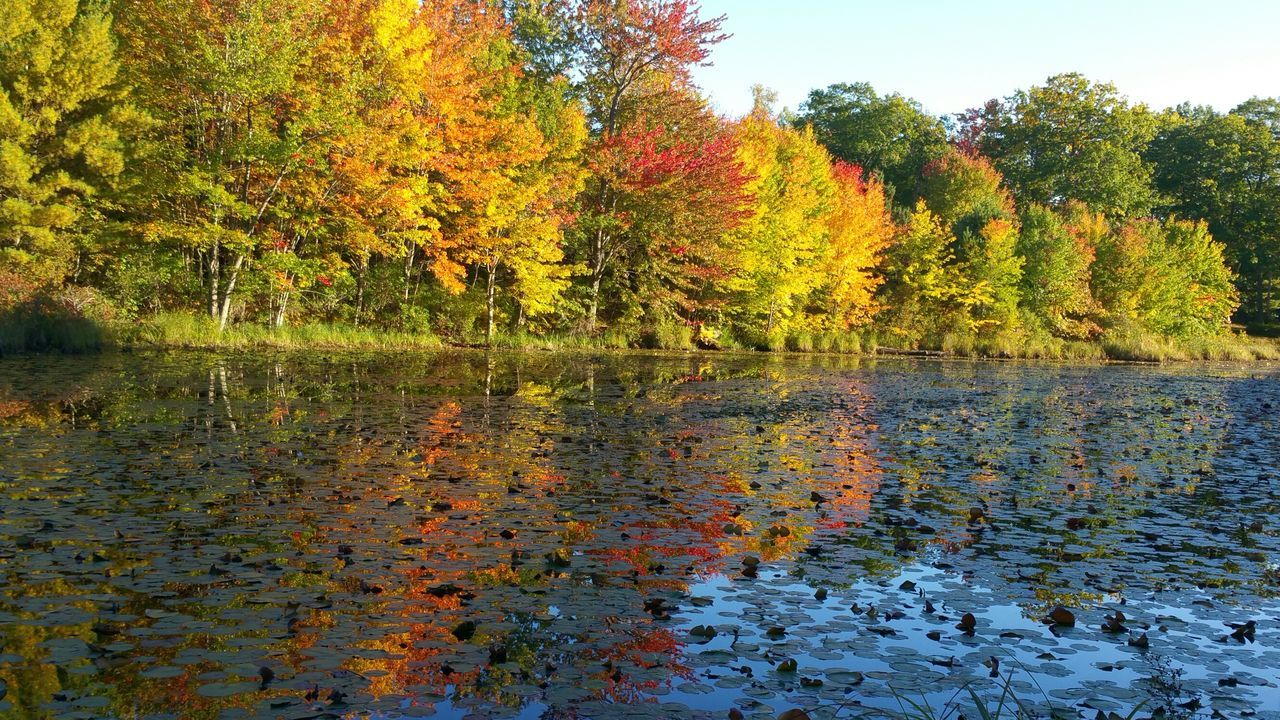 Autumn Reflections on the pond Reflection Tree Water Sky Multi Colored Splashing Close-up Beauty In Nature Nature Outdoors Day Autumn🍁🍁🍁 Foliage, Vegetation, Plants, Green, Leaves, Leafage, Undergrowth, Underbrush, Plant Life, Flora