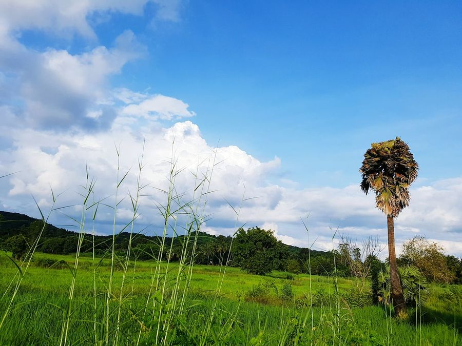 Tree Cloud - Sky Beauty In Nature Sky No People Outdoors Nature_shooters Naturelovers Nature_shooters Clouds Collection Beauty In Nature Viewing Thailand_allshots_nature Thail Scenics