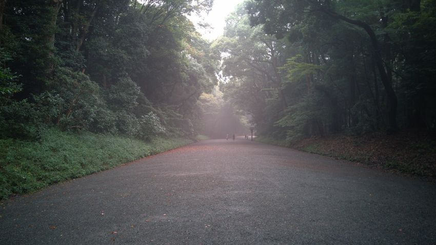 Beauty In Nature Empty Road Meiji Shrine Nature Outdoors Tranquil Scene