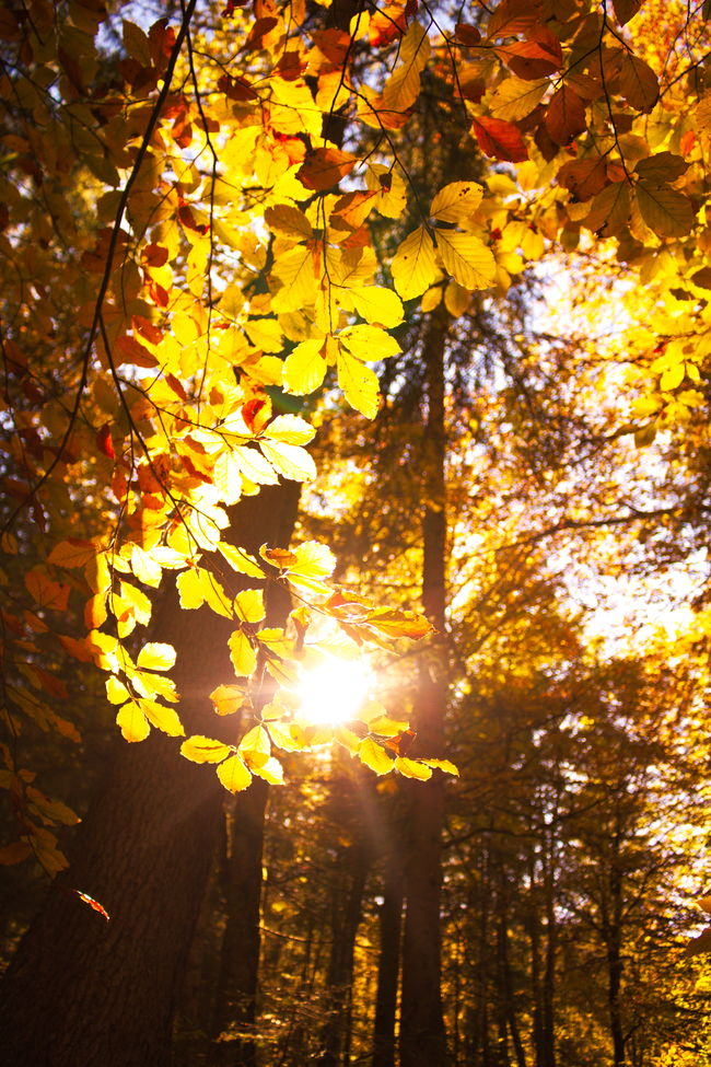 The beauty of the autumn colours in the woods at the Eibsee! :) Autumn Beauty In Nature Branch Change Day Eibsee Growth Leaf Low Angle View Nature No People Orange Color Outdoors Red Scenics Sky Sun Sunlight Tree Tree Trees Woods Woods And Color Yellow