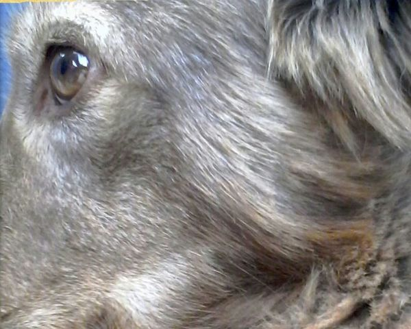 @wolfzuachis Animals Dogs Pets Cute Animal In My Yard Dog Summerdog Nature