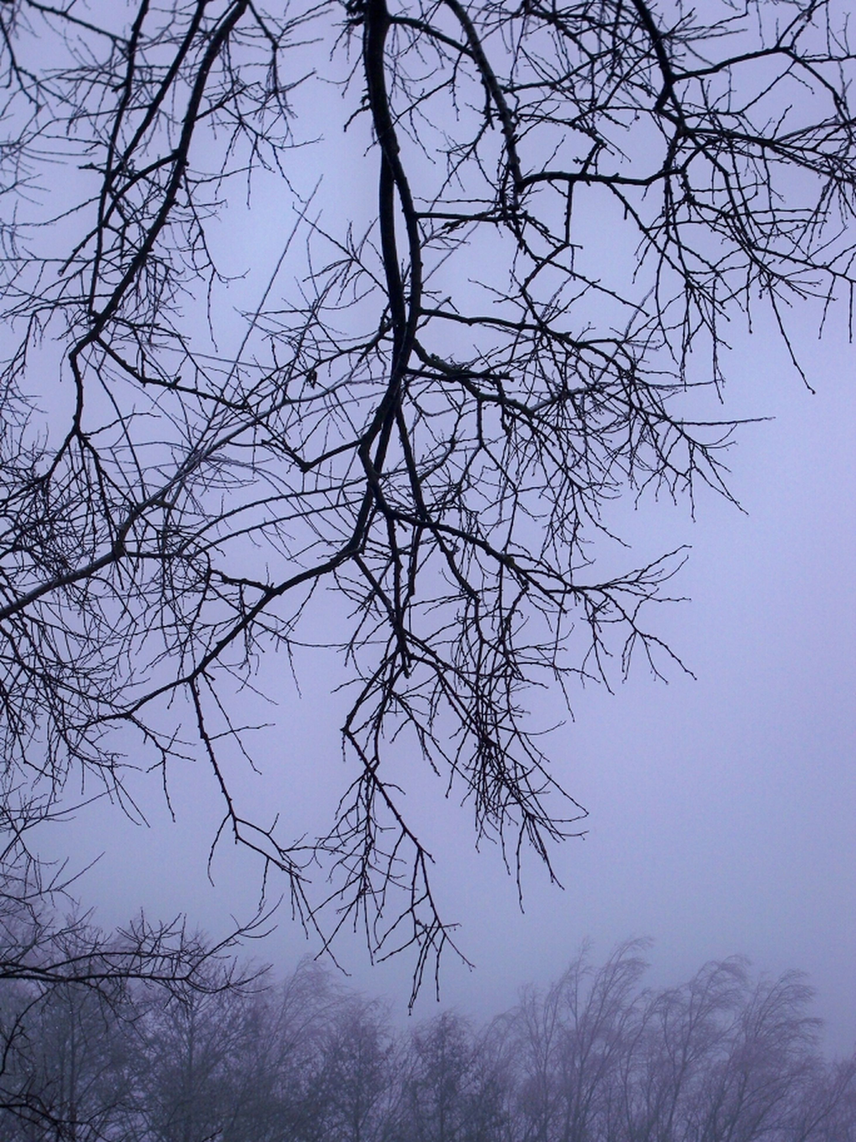 bare tree, branch, tree, tranquility, sky, nature, tranquil scene, scenics, beauty in nature, silhouette, low angle view, tree trunk, outdoors, no people, growth, clear sky, dusk, non-urban scene, day, winter