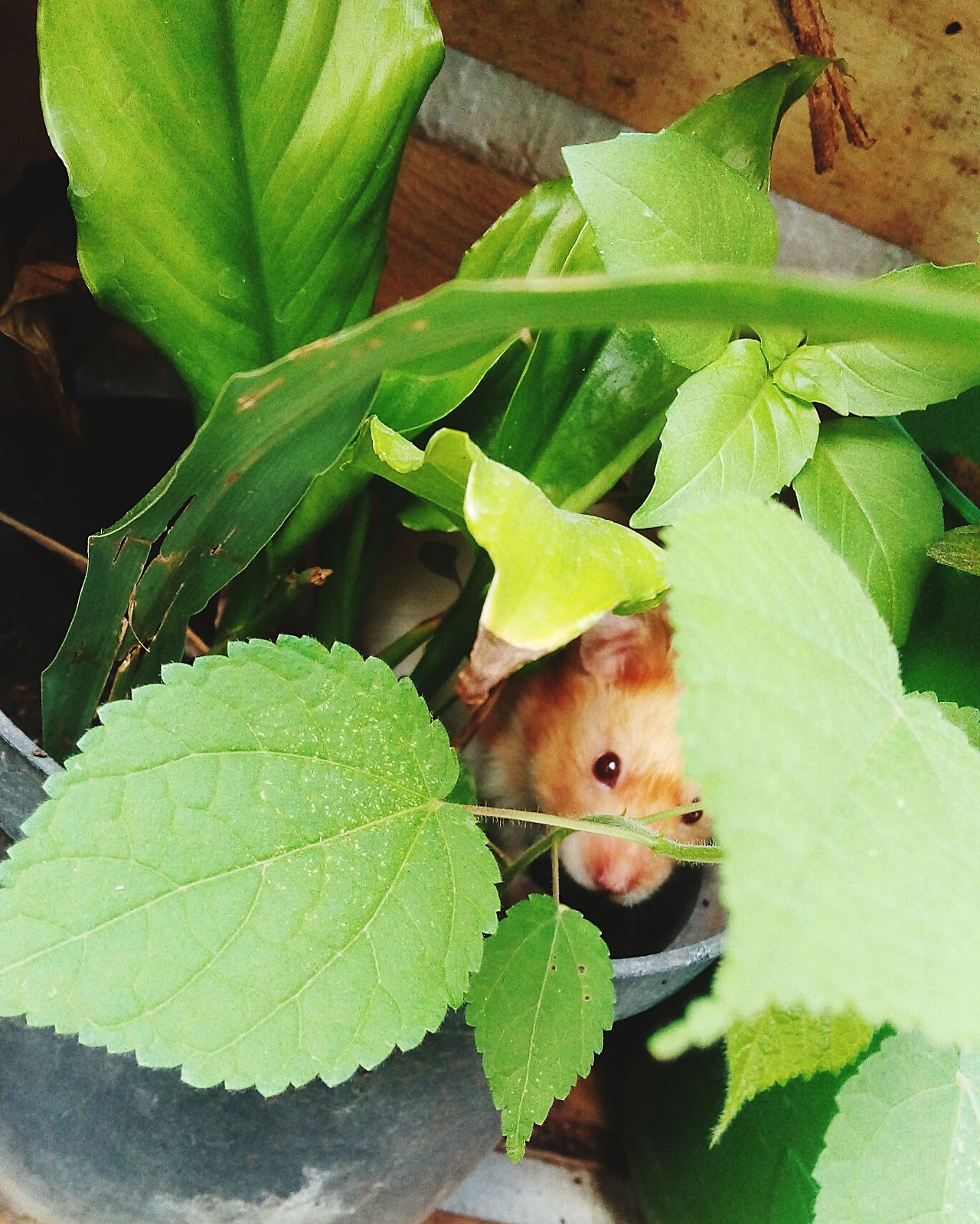 Beautiful stock photos of hamster, Animal Themes, Animal Wildlife, Animals In The Wild, Day