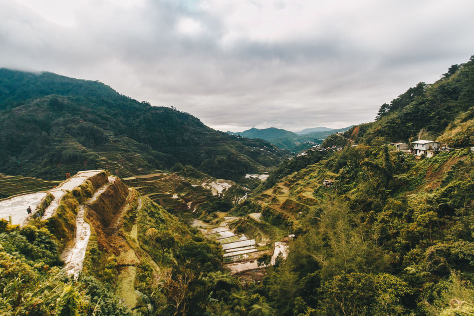 Rice Terraces in Banaue, Philippines. Ancient Ancient Civilization Architecture Beauty In Nature Cultures Environmental Conservation Farming Landscape Landscape Photography Mountain Mountain Range Nature No People Outdoors Philippines Travel Destinations TravelPhilippines Winding Road