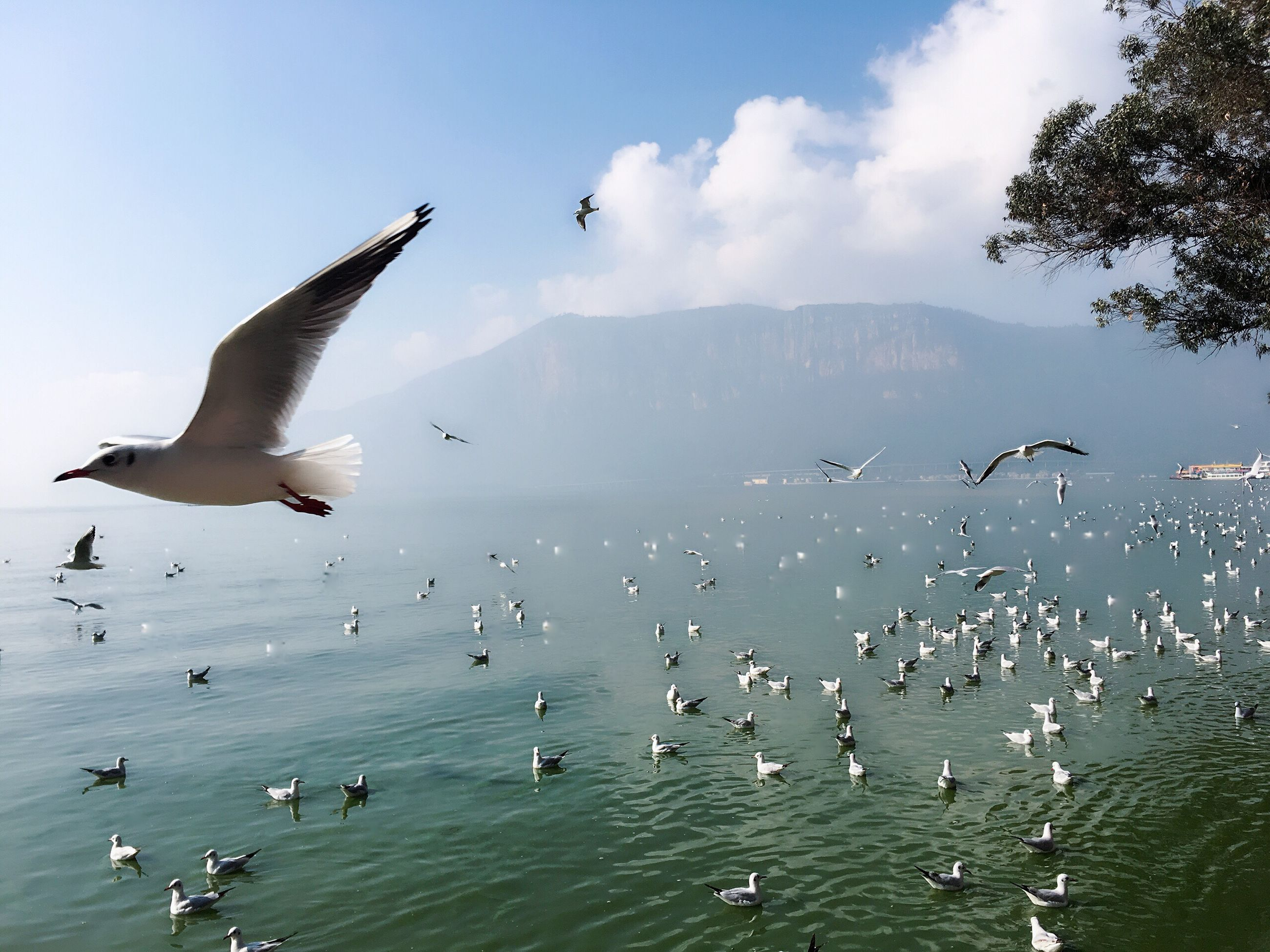flying, bird, animal themes, animals in the wild, mid-air, sky, animal wildlife, nature, large group of animals, outdoors, cloud - sky, water, spread wings, flock of birds, animal behavior, beauty in nature, day, no people, swimming, mammal