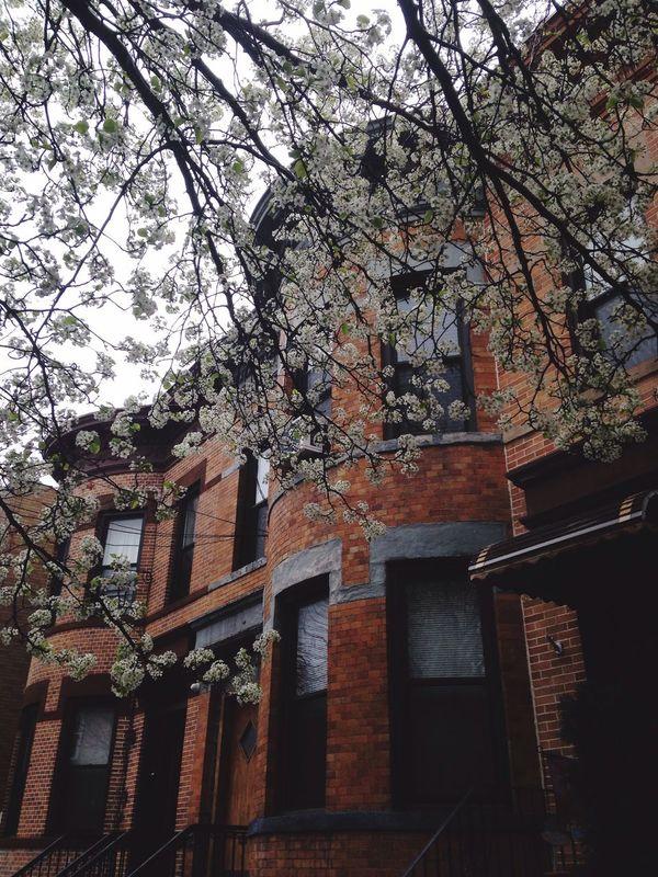 Rollhouse Building Architecture Spring Springtime Spring Flowers White Flower Nature Tree Trees Ridgewood Ridgewoodqueens