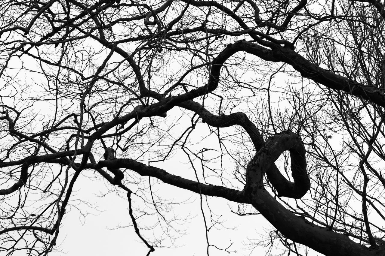 branch, tree, bare tree, low angle view, nature, no people, day, outdoors, sky, beauty in nature, dead tree, animal themes