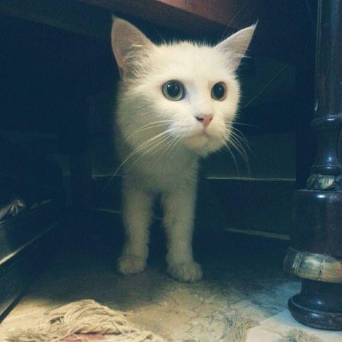 cousin has bought his cat Giantcat Cuteashellthough Kitty