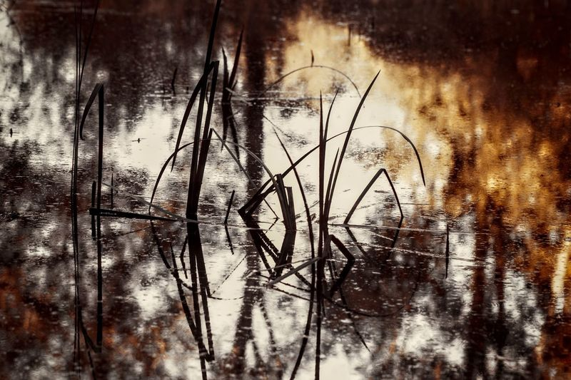 Ambiance Backgrounds Nature Puddle. Reflection Tree Water Plants Water Reflections