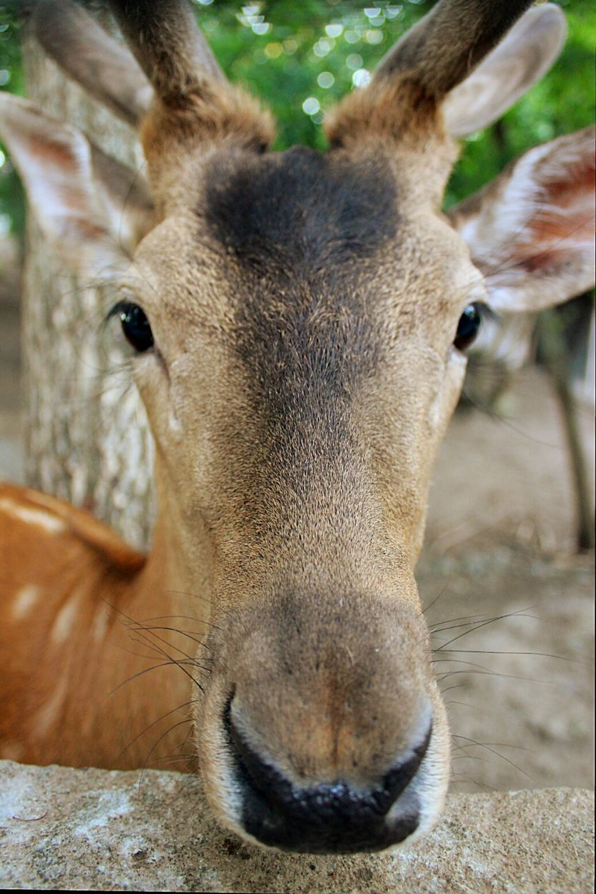 animal themes, one animal, animals in the wild, mammal, animal wildlife, animal head, day, no people, close-up, looking at camera, portrait, outdoors, nature, domestic animals