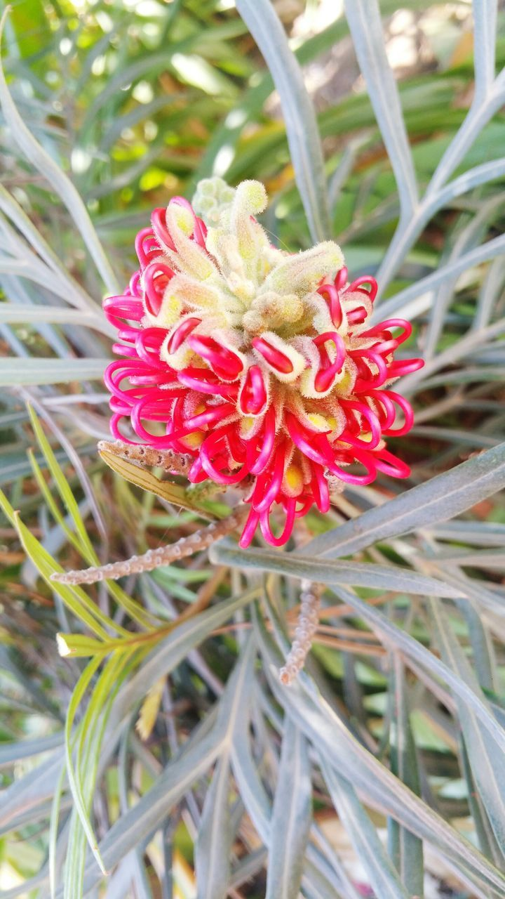 flower, nature, growth, beauty in nature, petal, plant, red, no people, fragility, flower head, outdoors, blooming, close-up, day, freshness