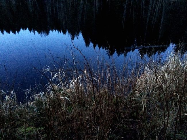 Learn & Shoot: After Dark Reflections And Water Blue Hour IPS2016Blue Eveninglight Light And Shadow