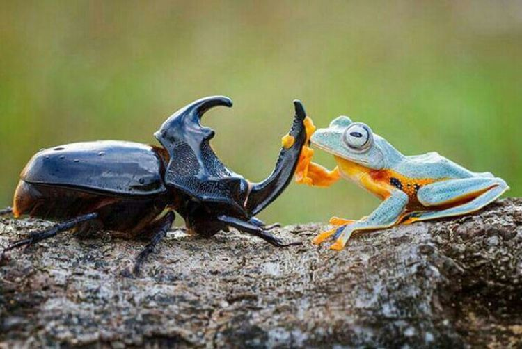 Taking Photos EyeEm Nature Lover Animal_collection Wildlife Nature_collection Frog Nature bro we have to save world !