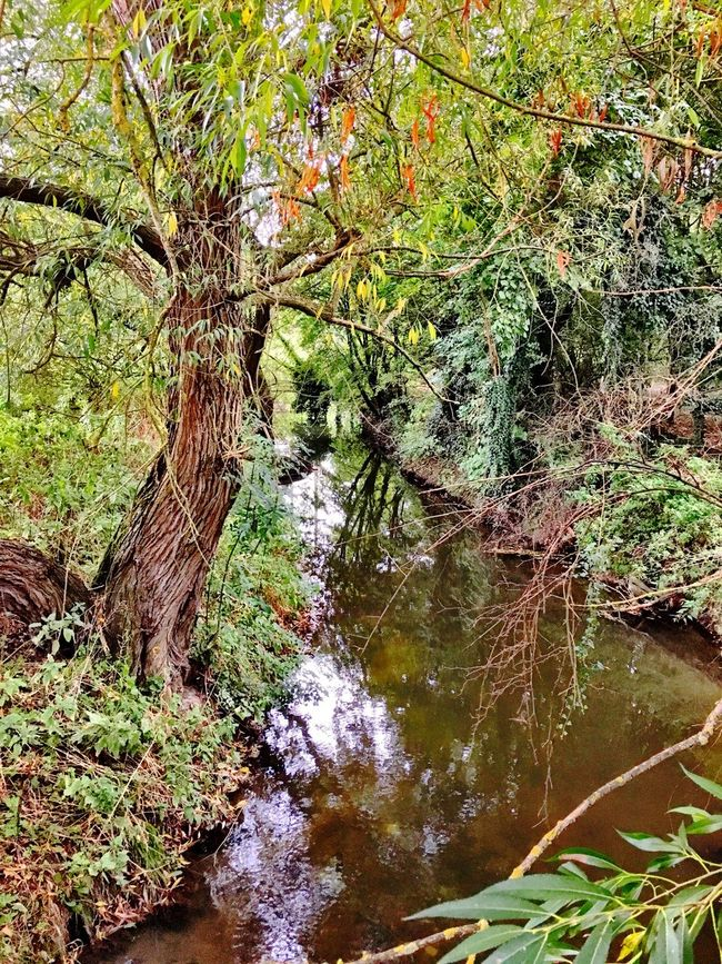 Water Stream Tree Forest Tranquility Tranquil Scene Scenics Beauty In Nature Nature Non-urban Scene Branch Tree Trunk Calm Day Plant Flowing Green Color Outdoors WoodLand Flowing Water Abingdon-on-Thames