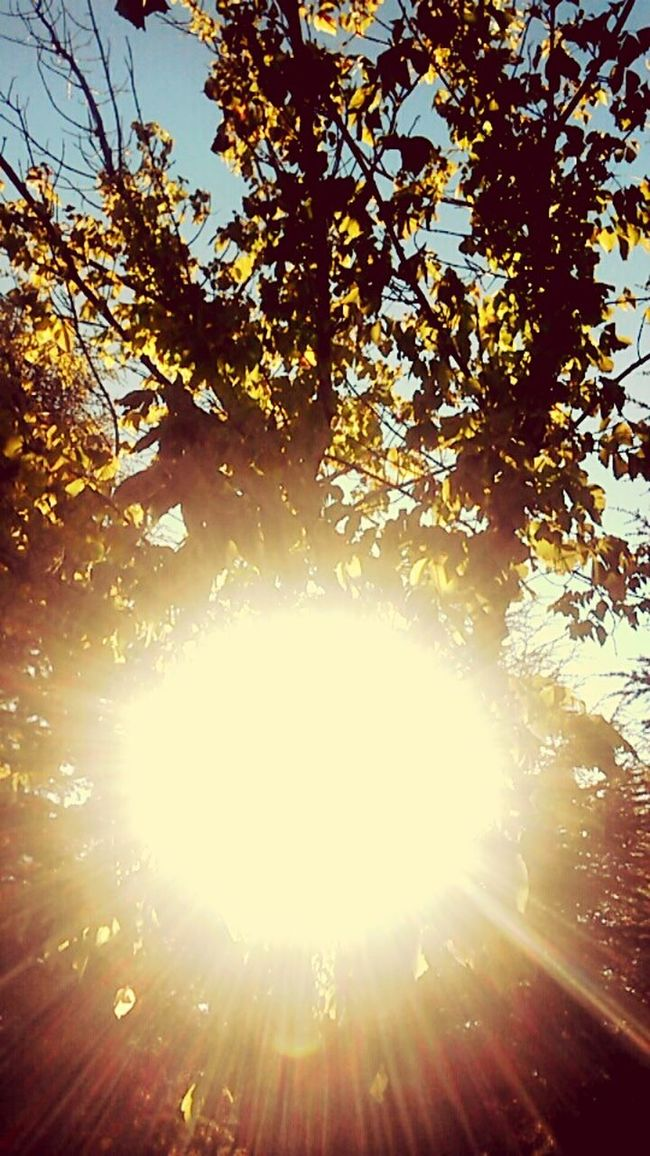 in this beautiful weather,studying at home..İt's terrible -.- Have a amazing day, my friends ♥.♥ Tree Sunbeam Sun Sunlight Lens Flare Blue Day Nature Growth Bright High Section Outdoors Sunny Sky Streaming Beauty In Nature Scenics Back Lit Green No People Goodlife Hello World Tree Canopy  Eyeem Market Eyeem Turkey